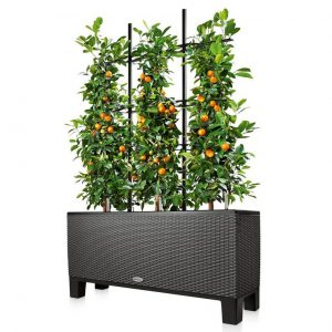 balcony trellis in black planter
